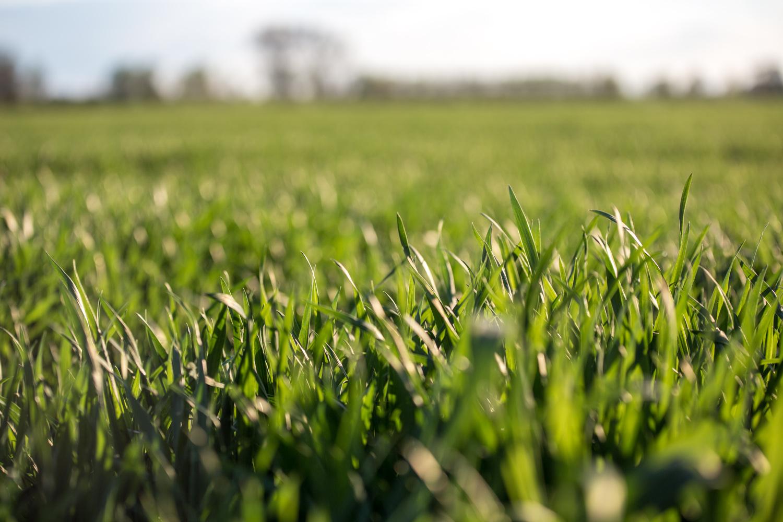 viertel_vor_landwirtschaft-4