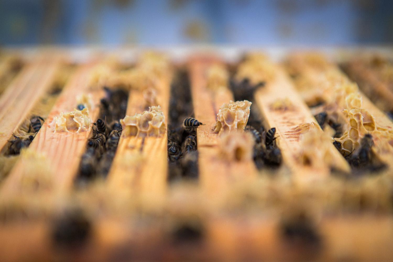 viertel-vor-stadtbienen-erika-mayr-photo-marcus-werner-18