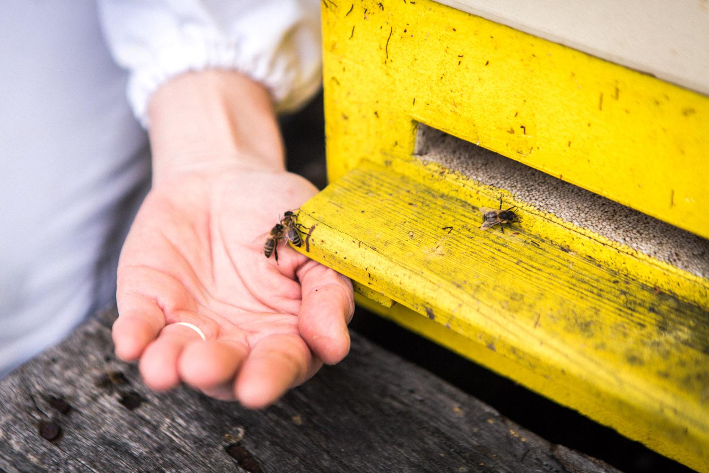 viertel-vor-stadtbienen-erika-mayr-photo-marcus-werner-25