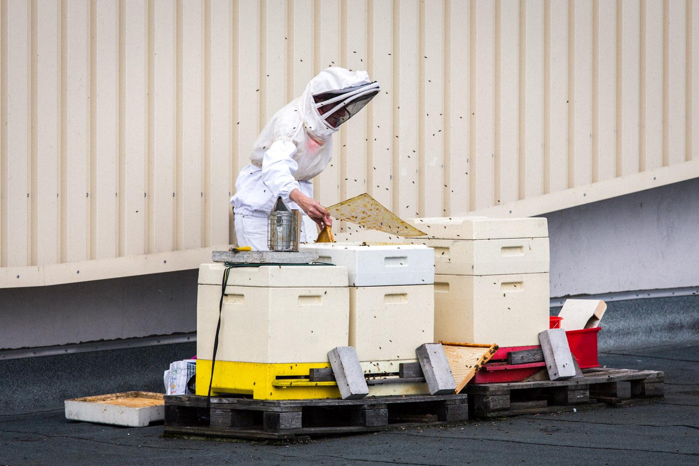 viertel-vor-stadtbienen-erika-mayr-photo-marcus-werner-33