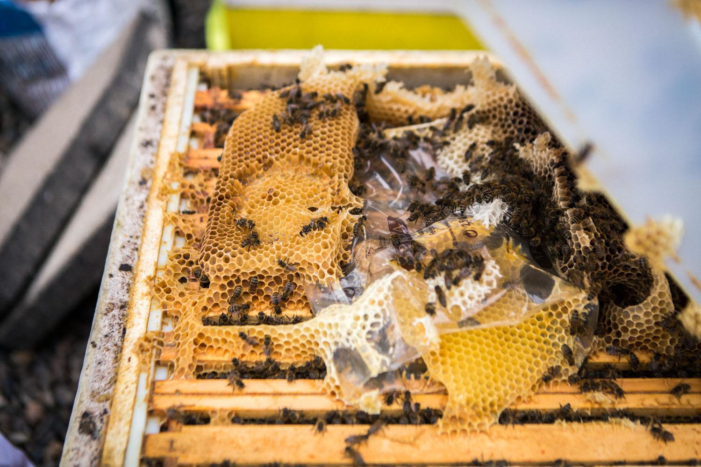 viertel-vor-stadtbienen-erika-mayr-photo-marcus-werner-53