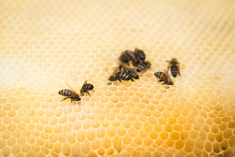 viertel-vor-stadtbienen-erika-mayr-photo-marcus-werner-54