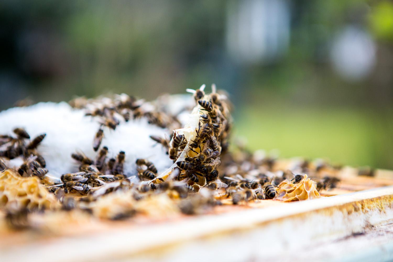 viertel-vor-stadtbienen-erika-mayr-photo-marcus-werner-68