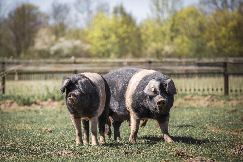 viertelvor-meinekleinefarm-marcuswerner-8