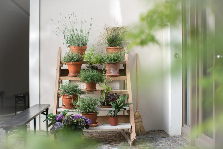 ysso-dopper-pflanzen-1360x907