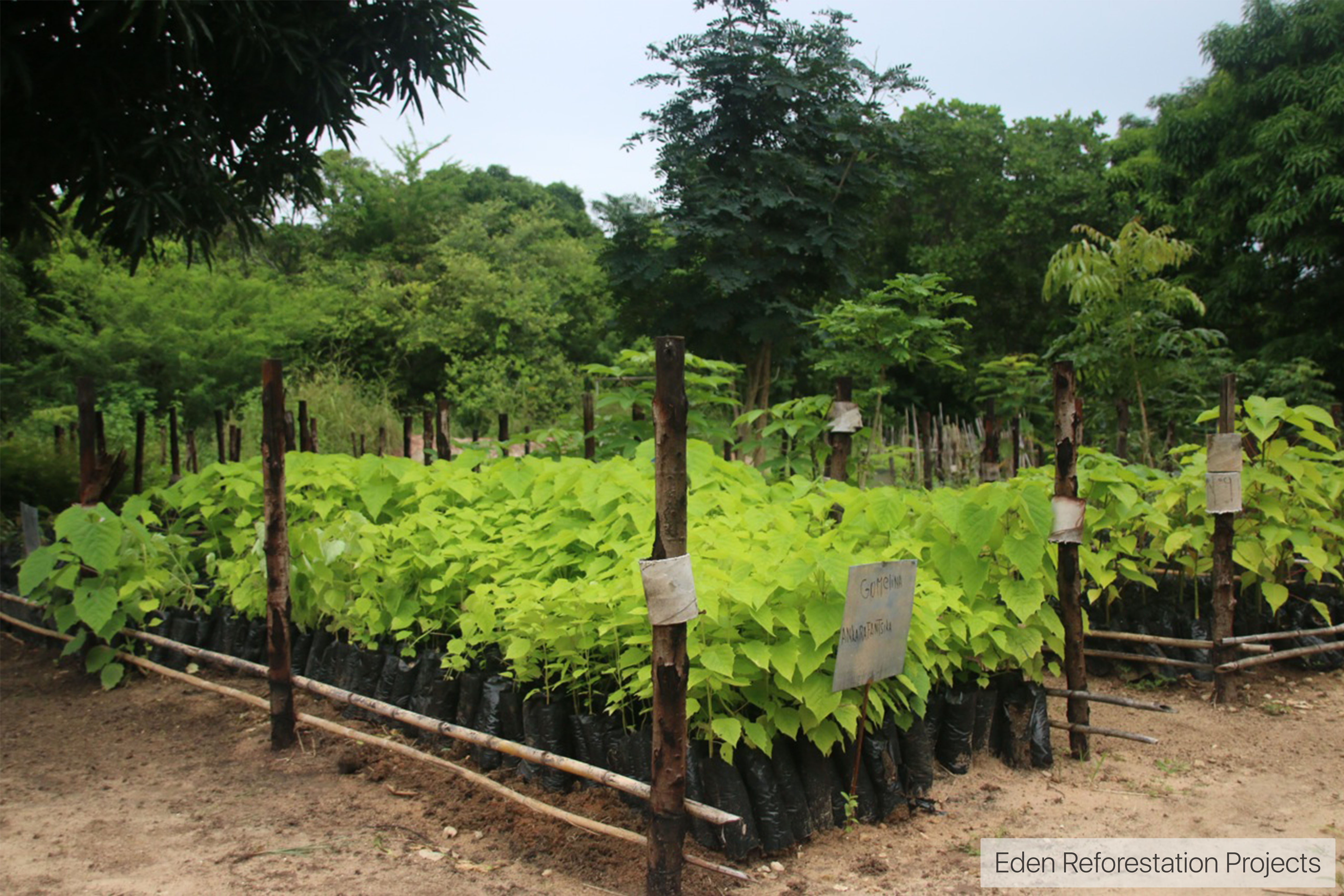 ecosia_eden-reforestation-projects-madagascar-1