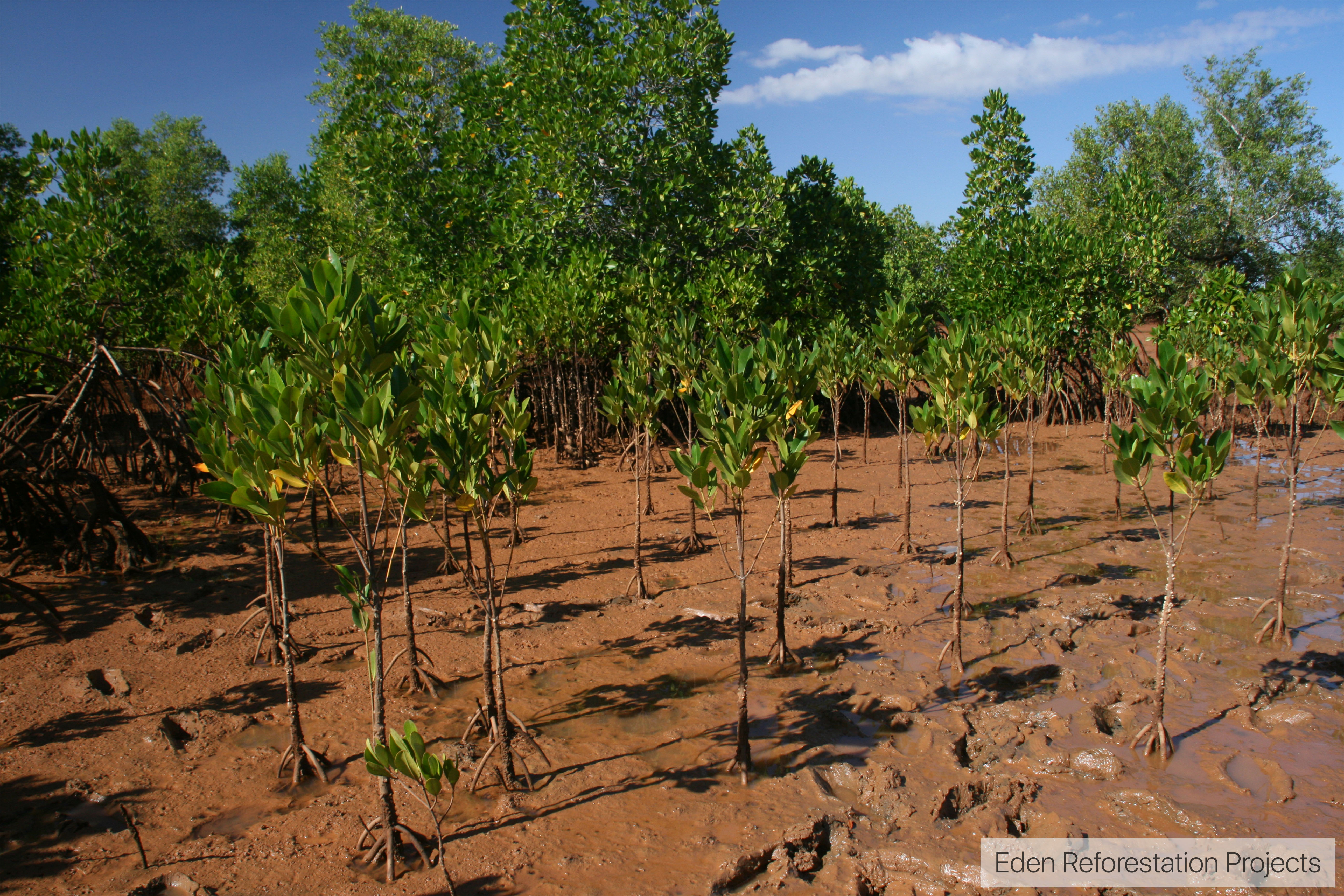 ecosia_eden-reforestation-projects-madagascar