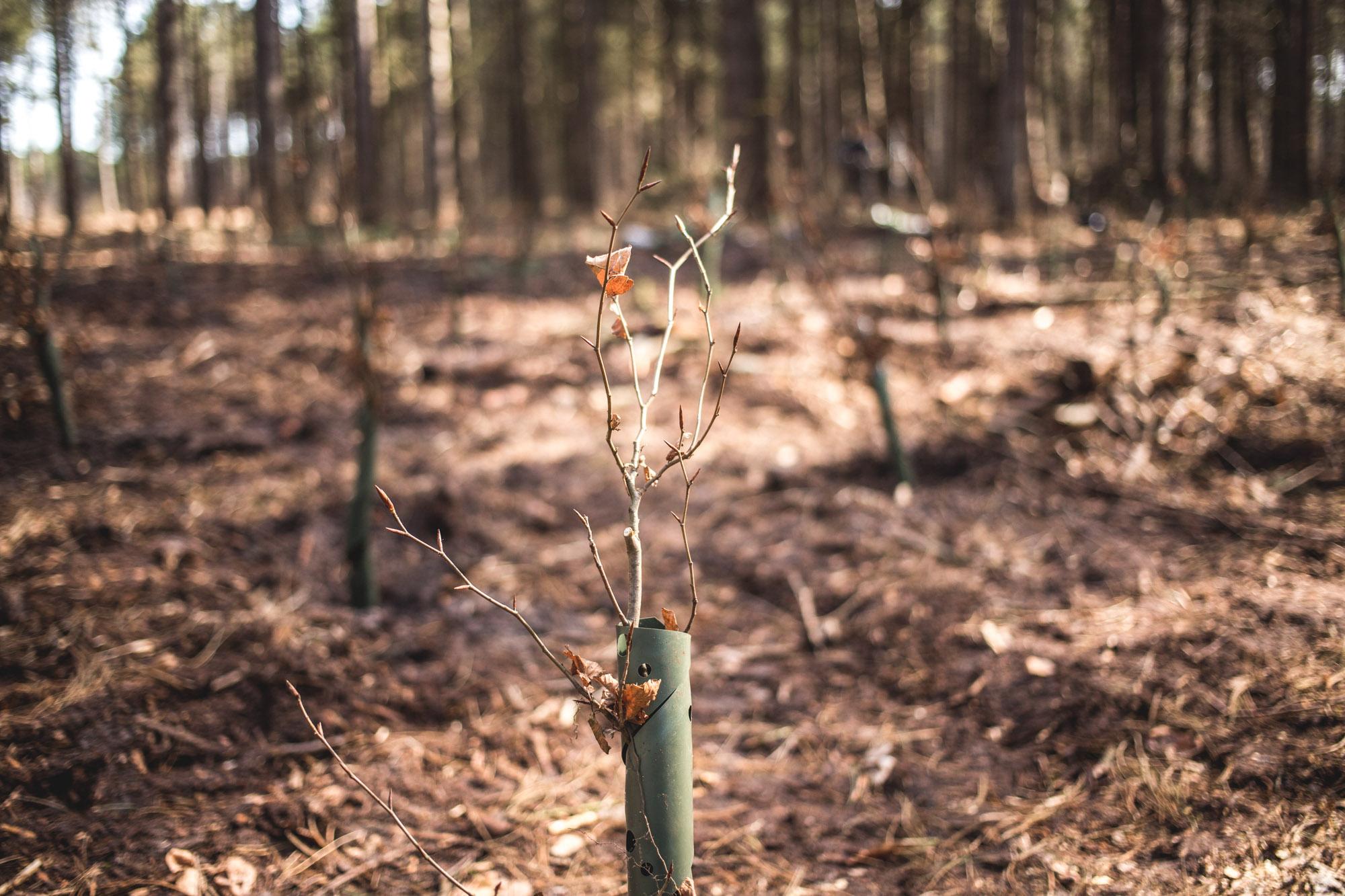 viertel-vor-amrum-bergwaldprojekt-28