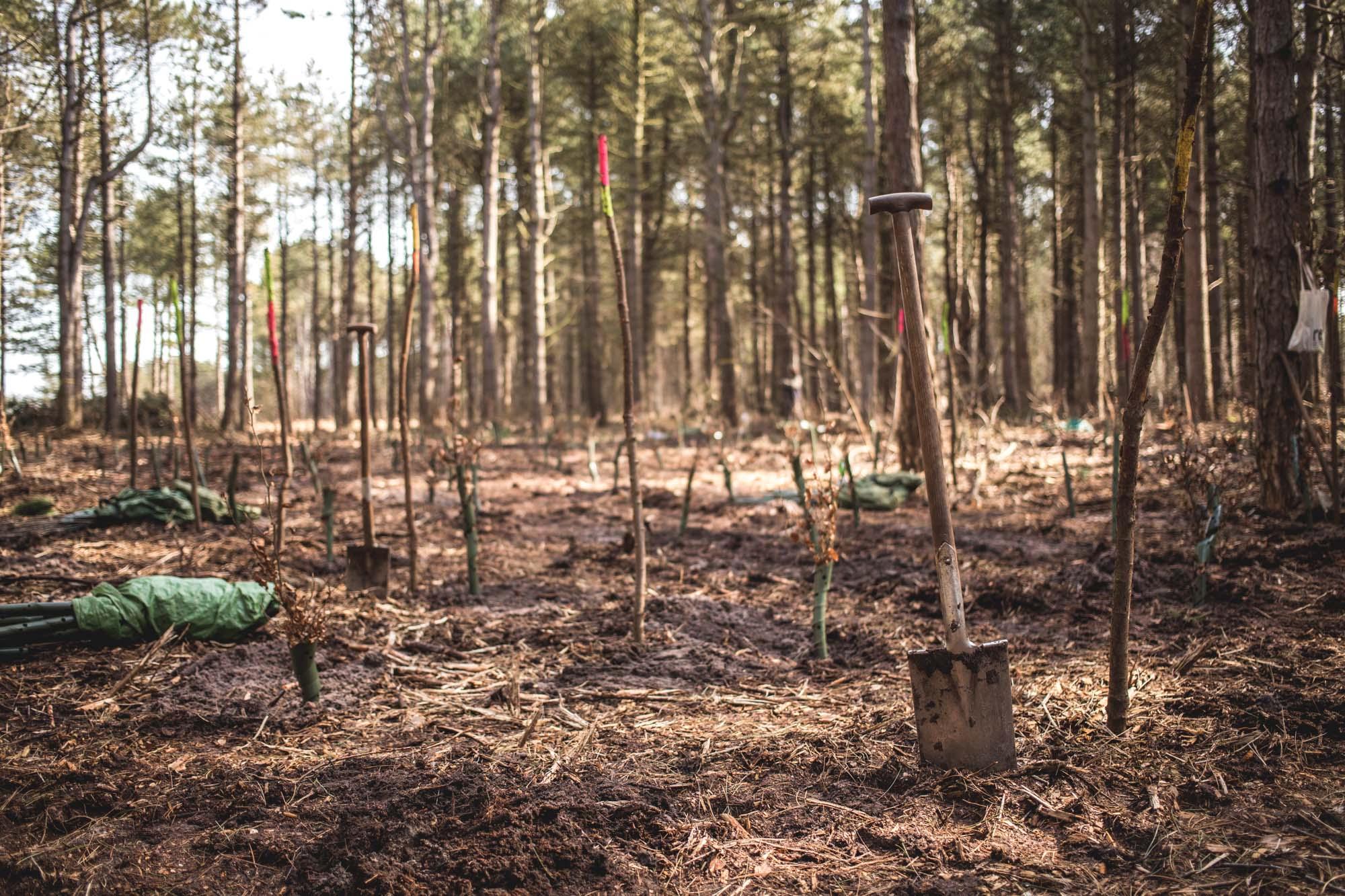 viertel-vor-amrum-bergwaldprojekt-30